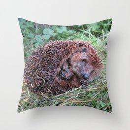 Erinaceidae,small hedgehog, wild living, sleeping in the grass Throw Pillow