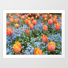 Tulips and Forget Me Nots Art Print