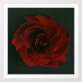 Red rose 51 Art Print