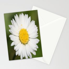 Closeup of a Beautiful Yellow and Wild White Daisy flower Stationery Cards