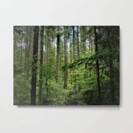 The Forrest Metal Print