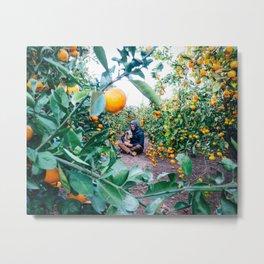 Valencian Orange Grove Metal Print