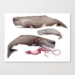 Sperm whale family Canvas Print