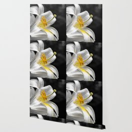 Lily flower covered by raindrops Wallpaper