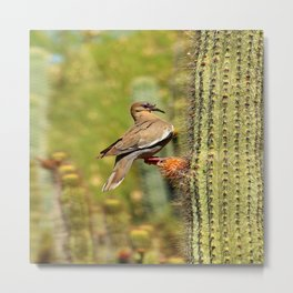 Perching On A Saguaro Cactus Metal Print