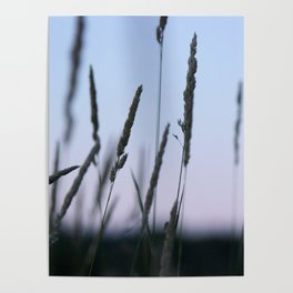 Summer Evenings Poster