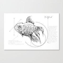 Geometry of a Goldfish Canvas Print
