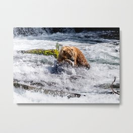 Brown Bear Fishing for Salmon Metal Print