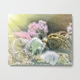 Finders Keepers - Ocean Treasures Metal Print