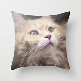 Portrait of an adult Siberian cat. Throw Pillow