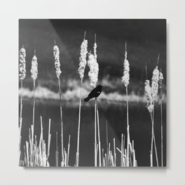 Blackbird Story Metal Print