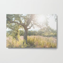 Sunrise in the Texas Hill Country Metal Print