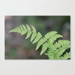 green fern in the forest Canvas Print