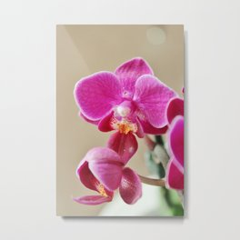 Mini Orchid in Purple Metal Print