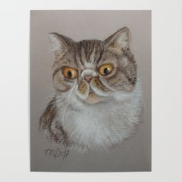 Exotic Cat Portrait Tabby Cat Pastel drawing Sketch on grey background Decor for Cat Lover Poster
