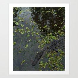 Its just a little croc! (new orleans) Art Print
