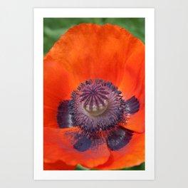 Portrait of a Poppy Art Print