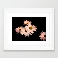 daisies Framed Art Prints featuring Daisies by Christine Belanger