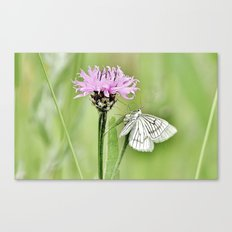 In my little world Canvas Print