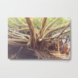 Granny of the forest Metal Print