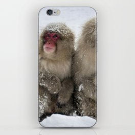 two snow monkeys iPhone Skin