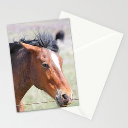 Horse Face Close Up Stationery Cards