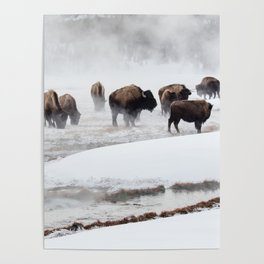 Yellowstone National Park - Bison Herd Poster