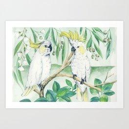 Saffron Cockatoo Art Print