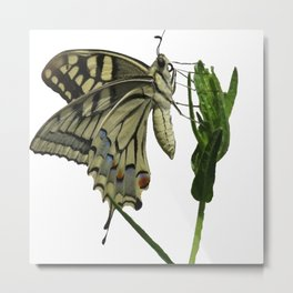 Scarce Swallowtail Metal Print