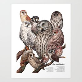 Owls of the Northeast Art Print