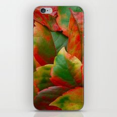 Autumn the artist iPhone & iPod Skin