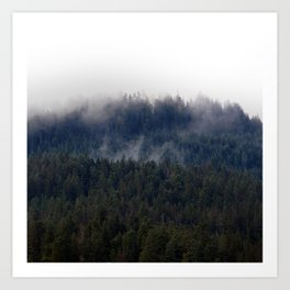 Misty Pine Trees Pacific Northwest Art Print