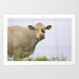 Cow Bird Art Print