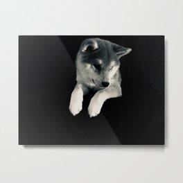 Silver Shiba Metal Print