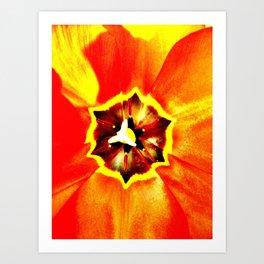 Orange Red Calyx Art Print