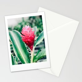 Tropical Ginger Stationery Cards