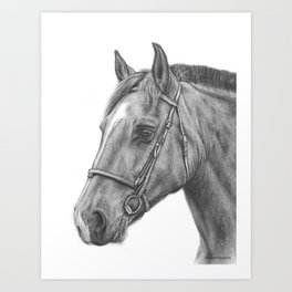 Horse graphite drawing portrait Art Print