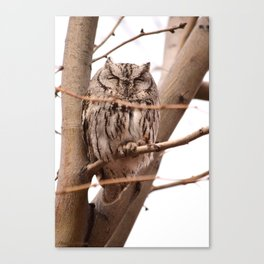 Wild Owl - Ivins, Utah Canvas Print
