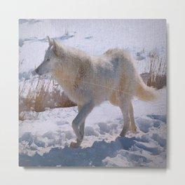 """Lone White Wolf"" Metal Print"