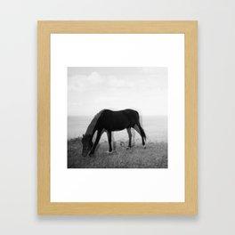 stallion_1 Framed Art Print