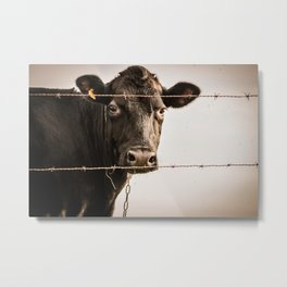 How Now, Brown Cow? Metal Print