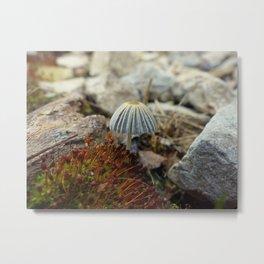 Tiny Toadstool Metal Print