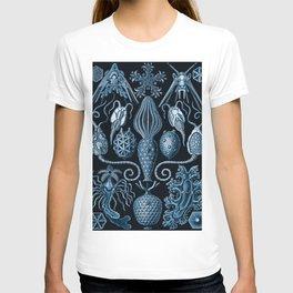 Ernst Haeckel Amphoridea Sea Life T-shirt