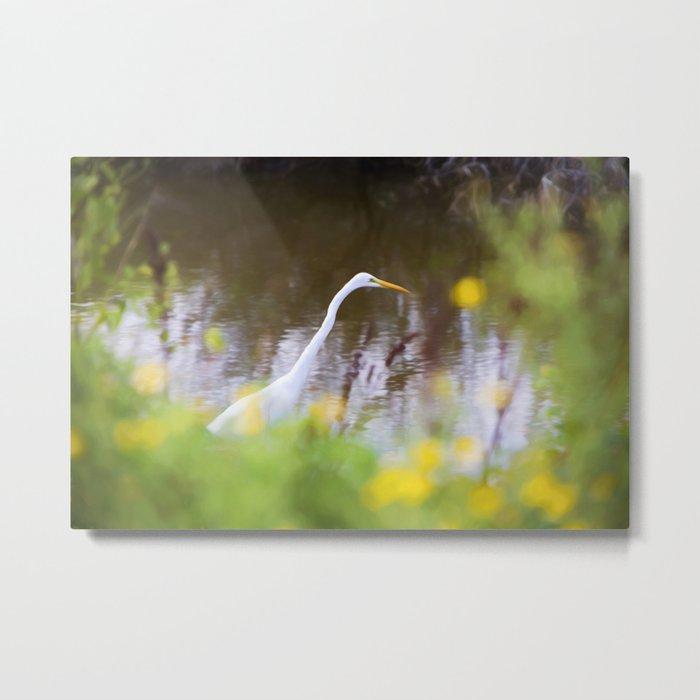 Great White Egret in the Marsh Metal Print
