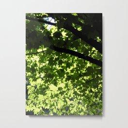 the light through leaves Metal Print