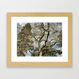 Spiny Trees, Warwick, England 2006 Framed Art Print