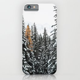 353. Autumn Pine in Snow Forest, Banff, Canada iPhone Case