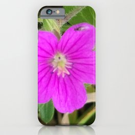 Winged ant playing on wildflowers of Donggeomeunioreum, Jeju Island, Korea. iPhone Case
