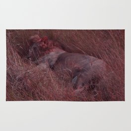 Sleeping Lion in Red Rug