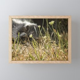 Release of a Young Skunk Framed Mini Art Print